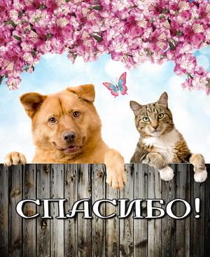 Кот с собачкой говорят спасибо!