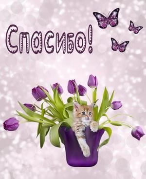 Котик в вазе с тюльпанами