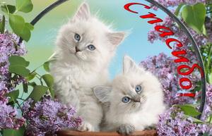 Два котика в обрамлении из сирени