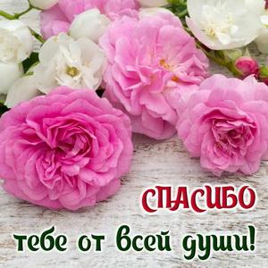 https://bonnycards.ru/images/spasibo/small/s-spasibo0030.jpg