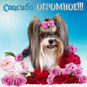 Милая собачка в окружении цветов