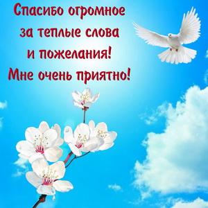 Картинка с голубем в синем небе