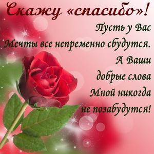 Слова благодарности и красная роза