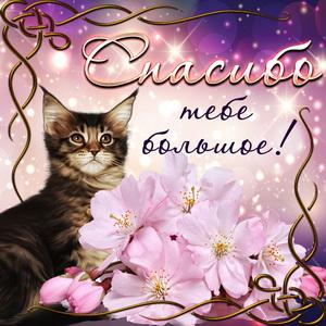 Милый котик говорит тебе большое спасибо
