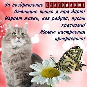 Красивый котик и благодарность за поздравление