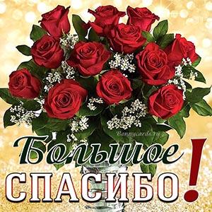Большое спасибо на открытке с красными розами