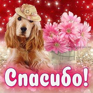 Надпись спасибо на фоне собаки с цветами