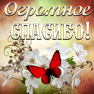 Картинка огромное спасибо с бабочкой