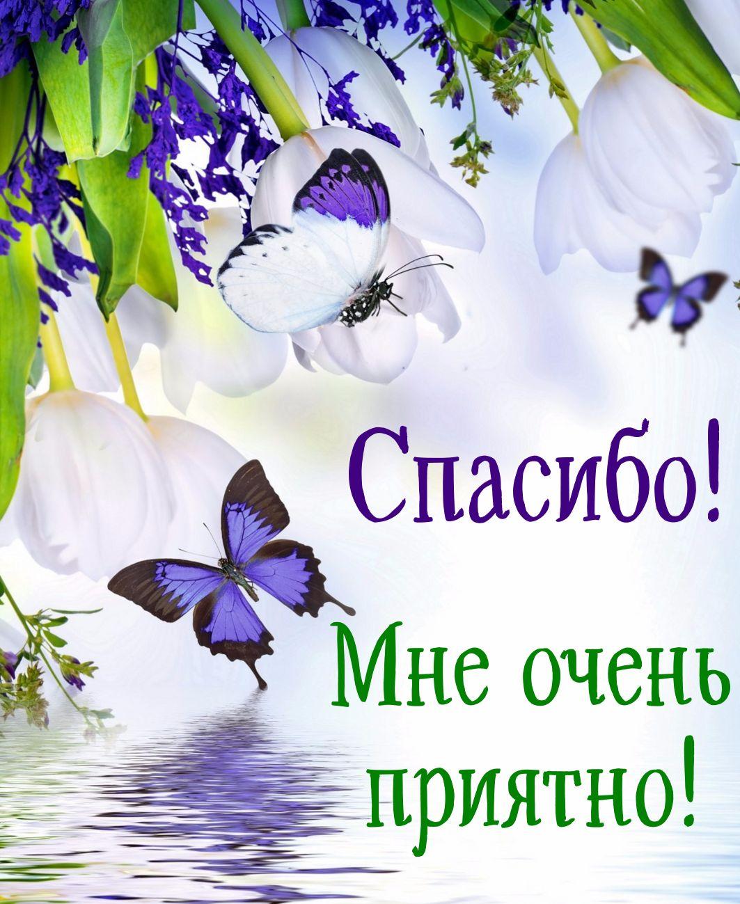 Открытка спасибо - бабочки на красивом цветочном фоне