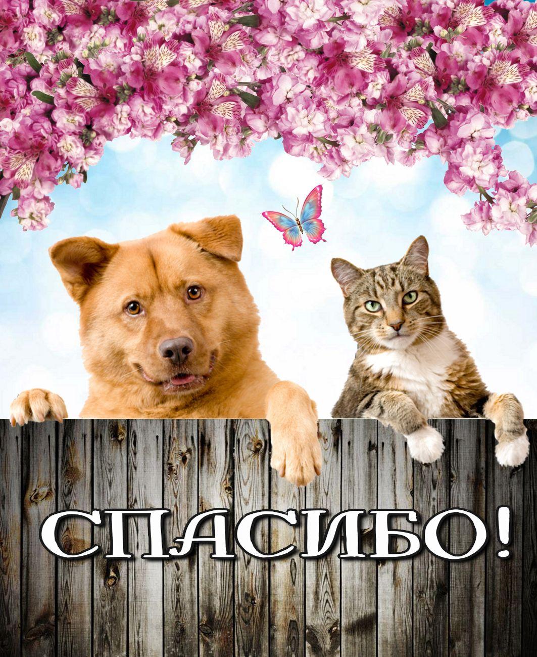 Открытка - Кот с собачкой говорят спасибо!