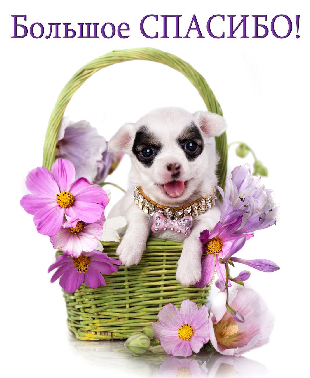 Открытка спасибо - собачка в корзинке с цветами