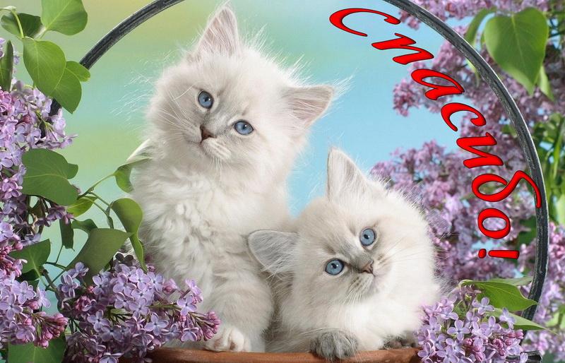 Открытка спасибо - два котика в обрамлении из сирени