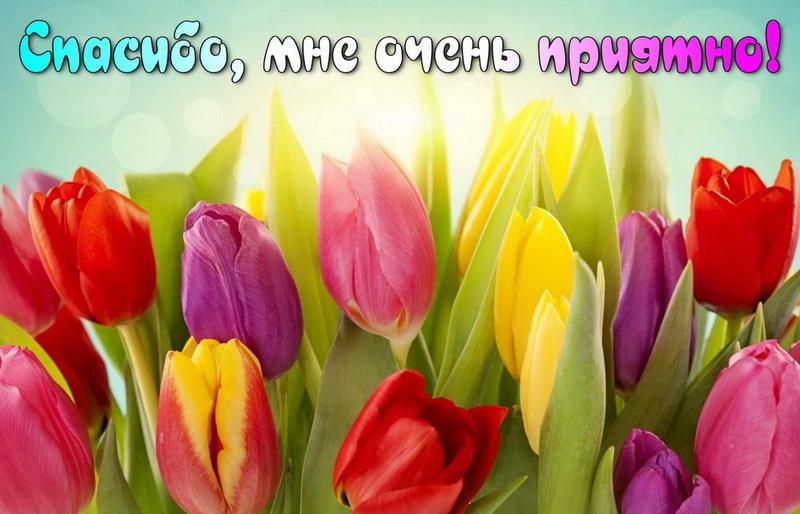 Открытка спасибо - красивые разноцветные тюльпаны