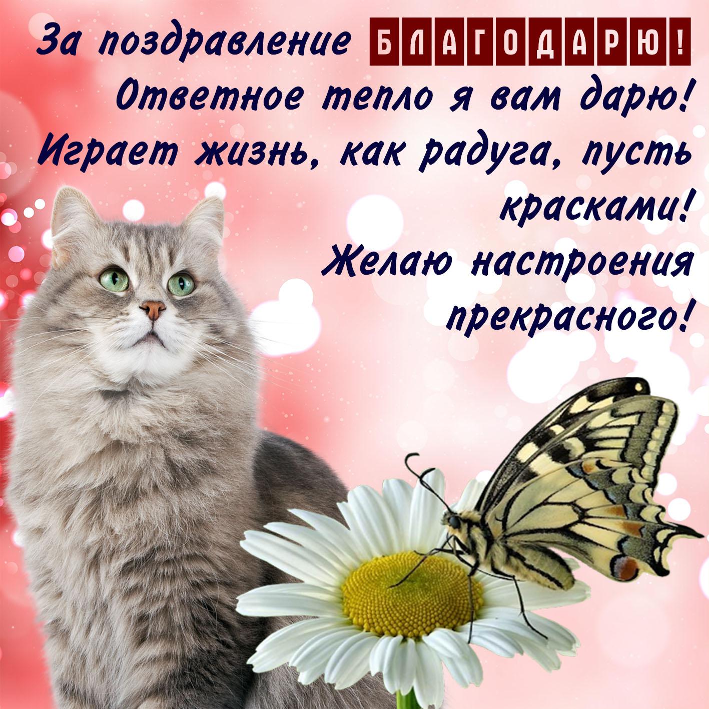 Открытка - красивый котик и благодарность за поздравление