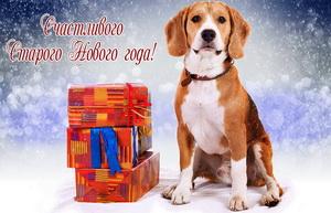 Красивая собачка со стопкой подарков