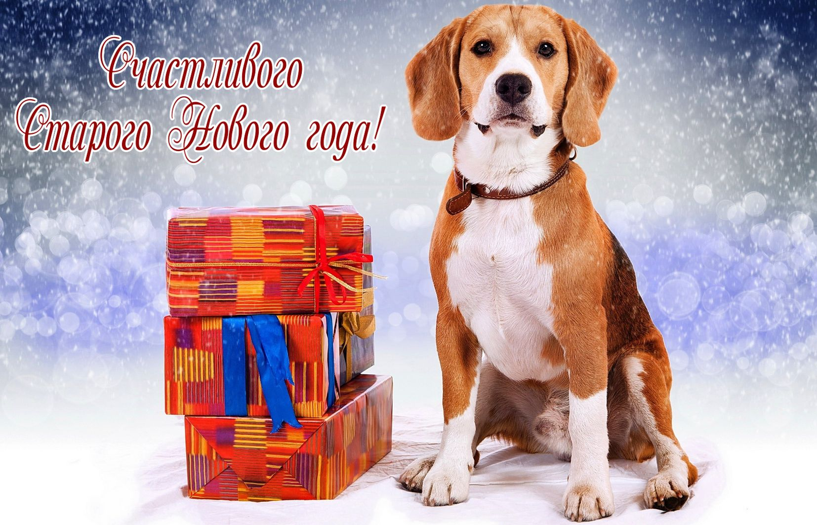 Открытка со Старым Новым годом - красивая собачка со стопкой подарков