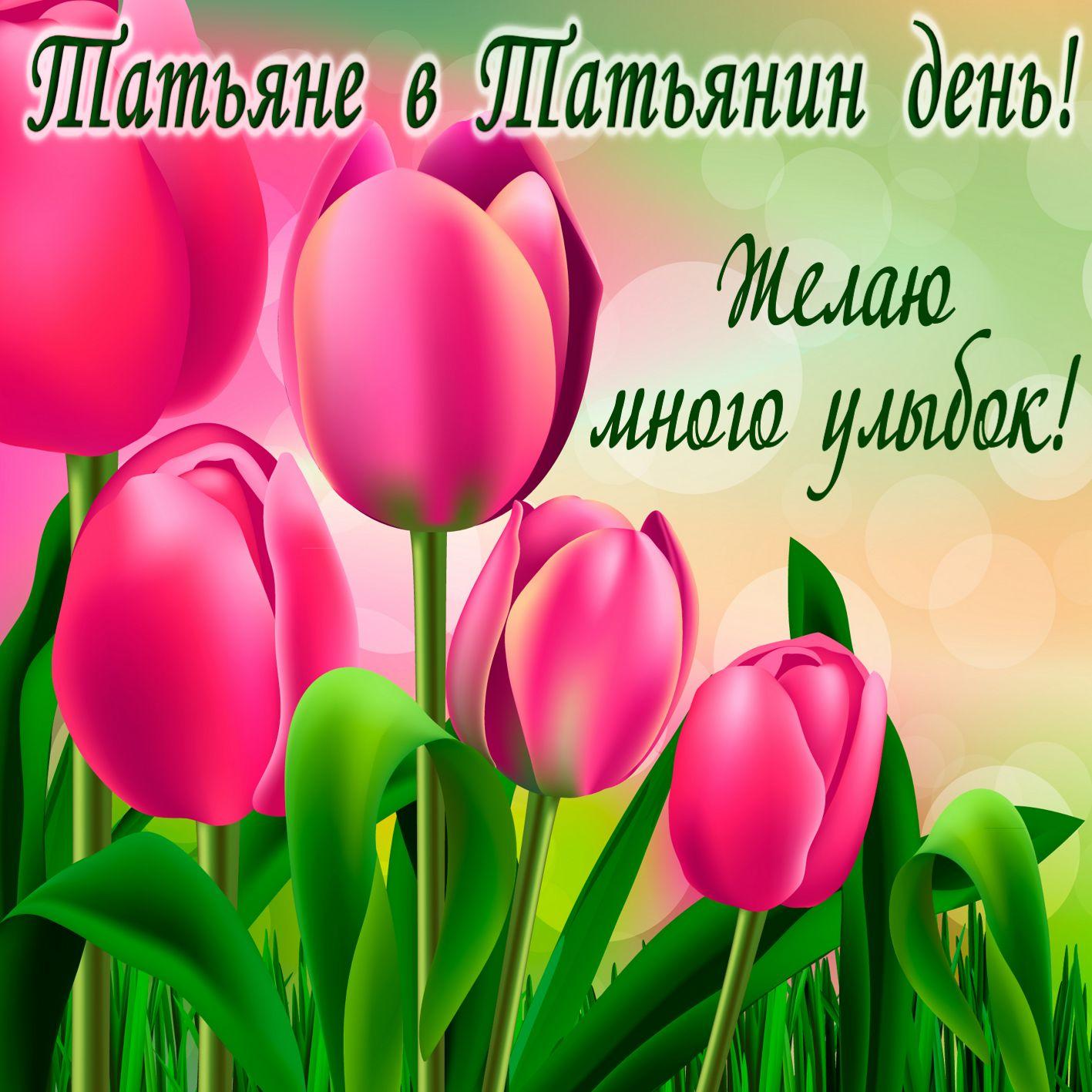 Красивые тюльпаны на Татьянин день