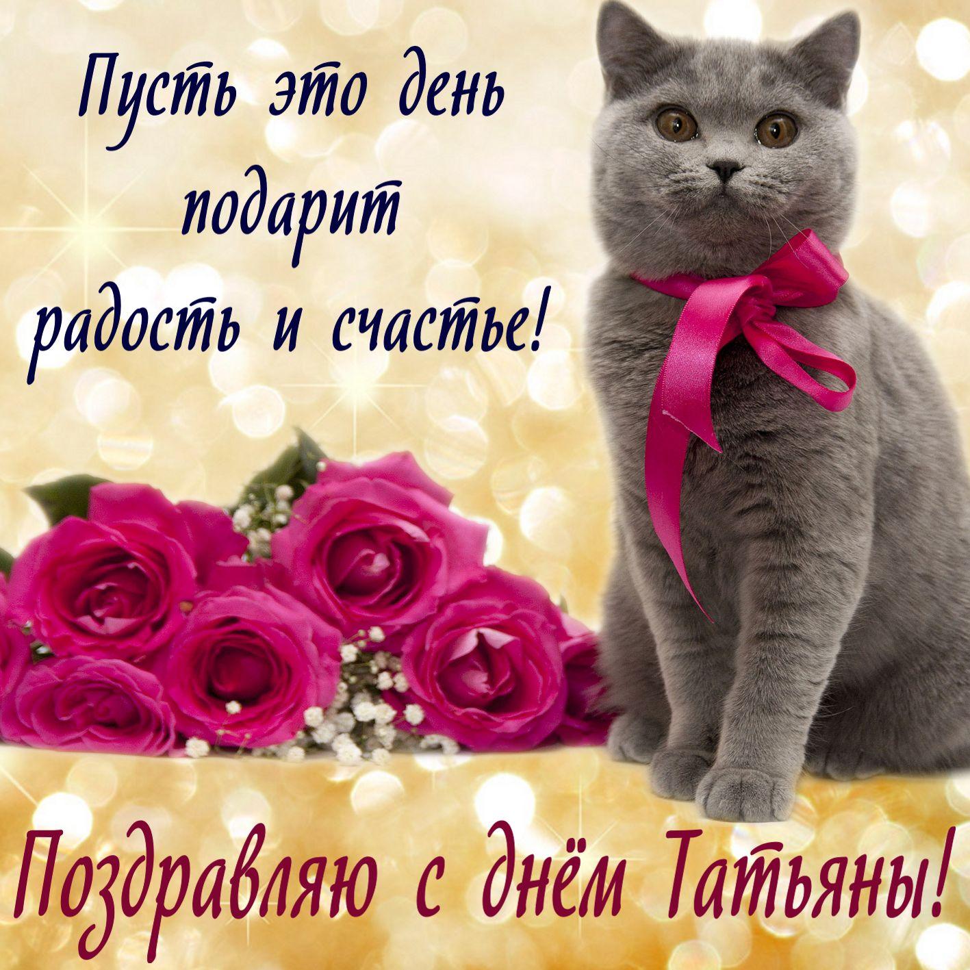 Красивый котик желает счастья в День Татьяны