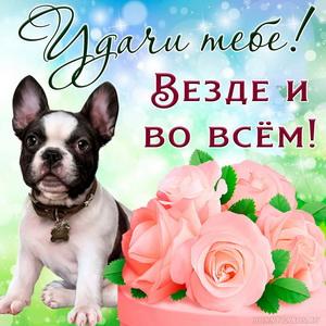 Открытка с розами и милой собачкой желающей тебе удачи