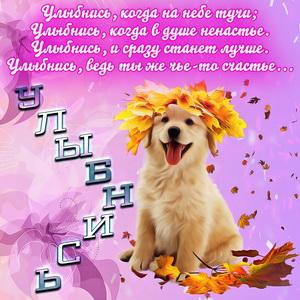 Милая собачка и надпись улыбнись