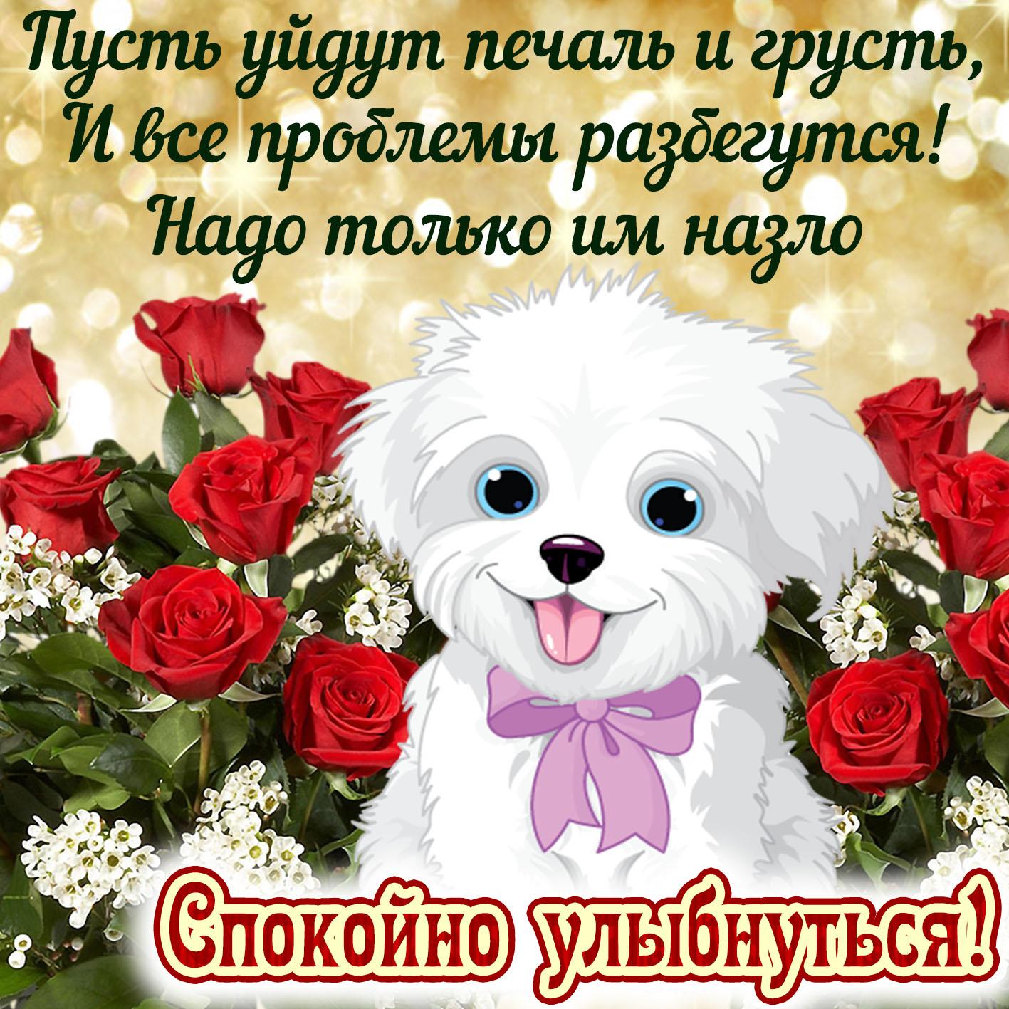 Картинка улыбнись с приятной собачкой среди розочек