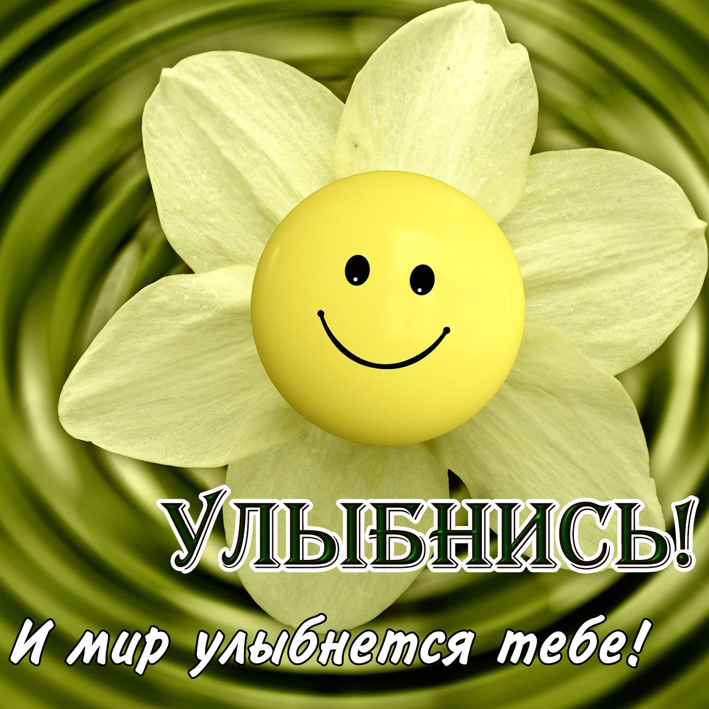 Картинка улыбнись с милым солнышком в цветочке