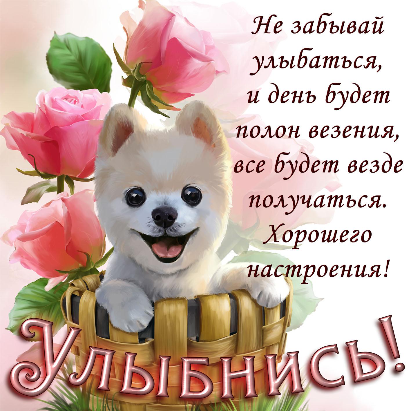 Картинка с собачкой и напоминанием улыбаться