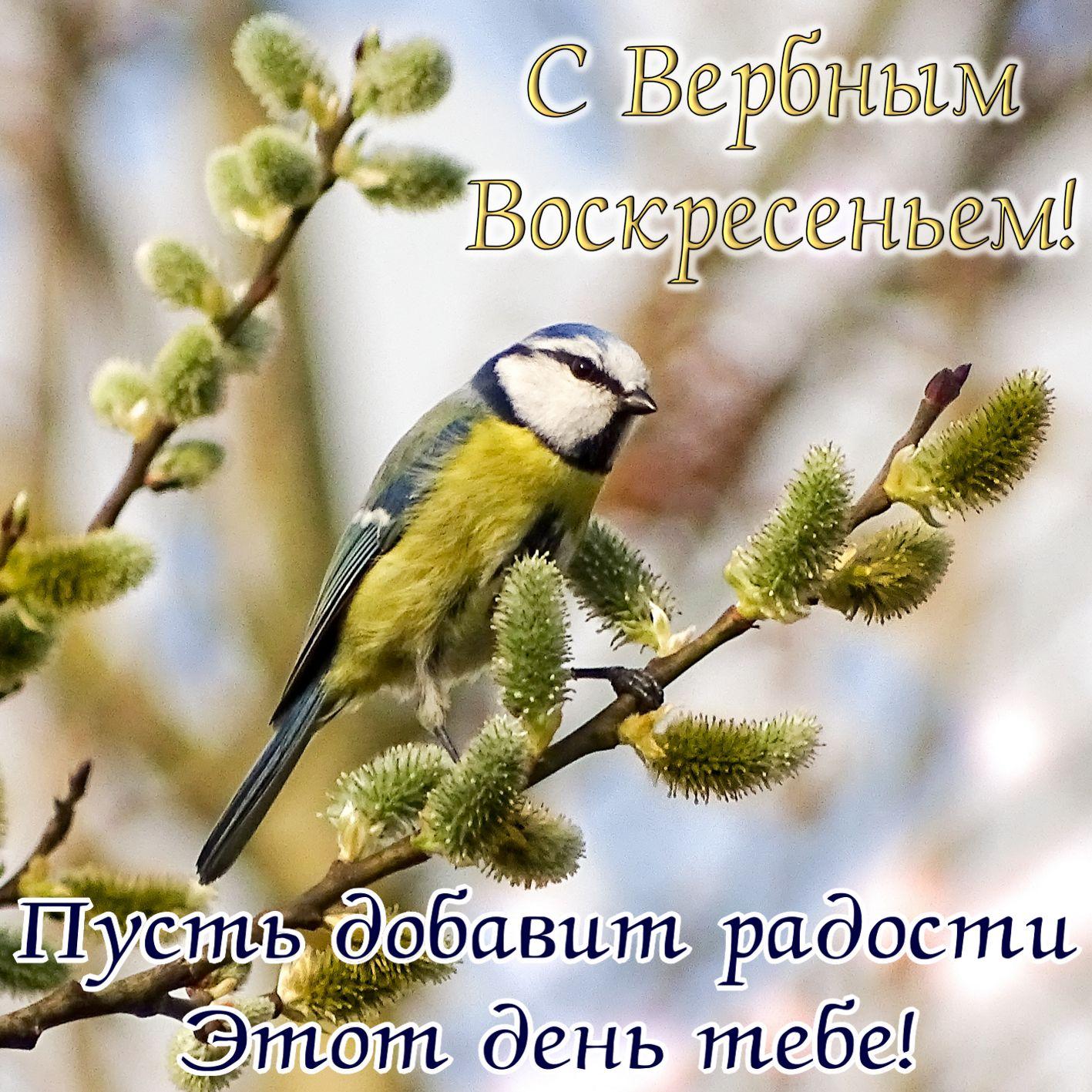 Открытка с птичкой на вербе и пожеланием