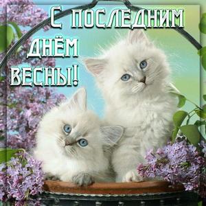Картинка с котятами весной среди сирени