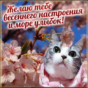 Милый котик желает тебе весеннего настроения