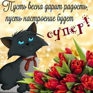 Картинка с котиком и весенними тюльпанами