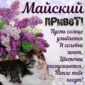 Котик шлёт Вам майский привет и веточку сирени