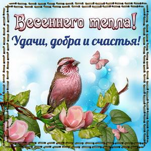 Картинка с птичкой и пожеланием весеннего тепла