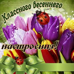 Тюльпаны для классного весеннего настроения