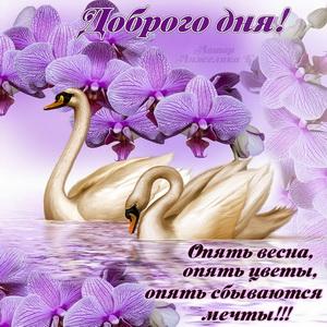 Картинка с лебедями на фоне весенних цветов