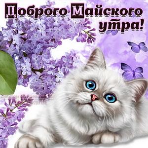 Миленький котик желает доброго майского утра