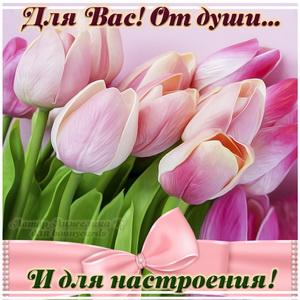 Открытка с тюльпанами для души и настроения