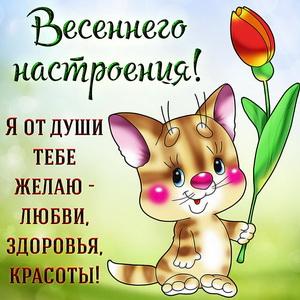 Забавный котик желает тебе весеннего настроения
