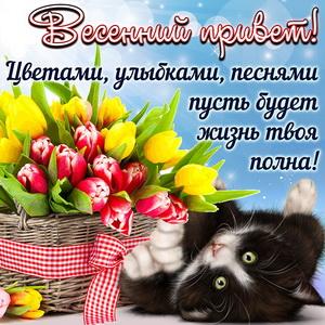 Котик с корзиной тюльпанов передает весенний привет