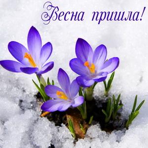 Цветы пробивающиеся из под снега