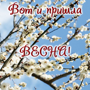 Распускающиеся цветы на первый День весны
