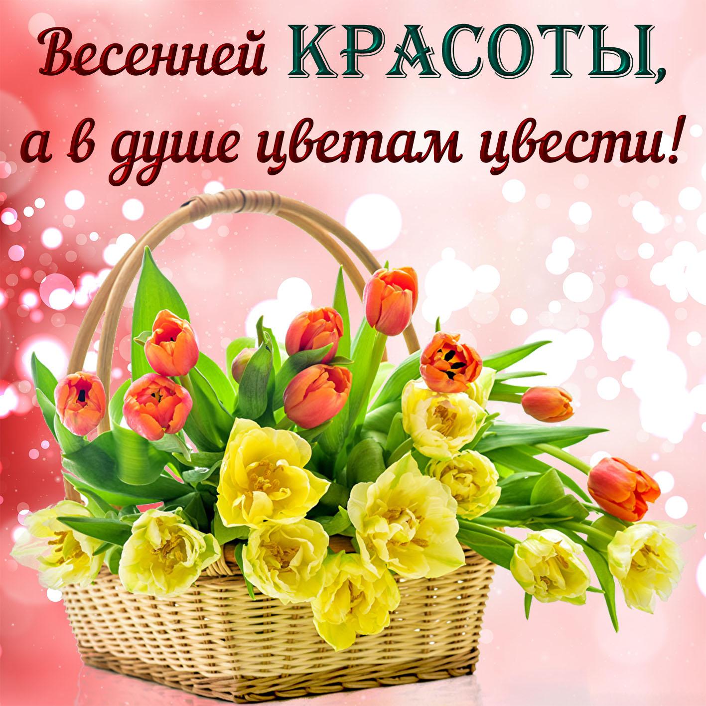 Открытка с весенними цветами на милом фоне
