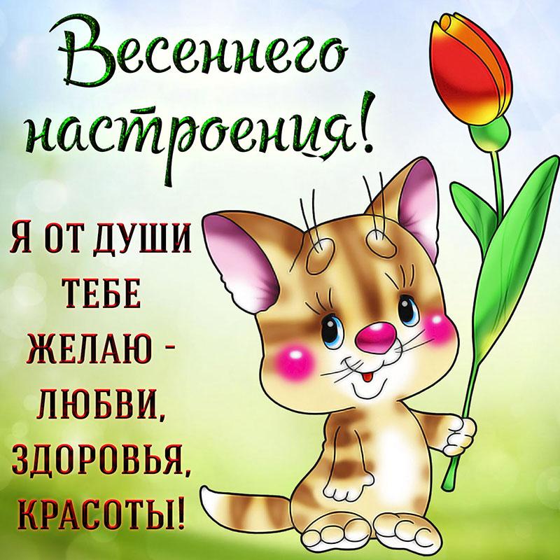 Открытка - забавный котик желает тебе весеннего настроения
