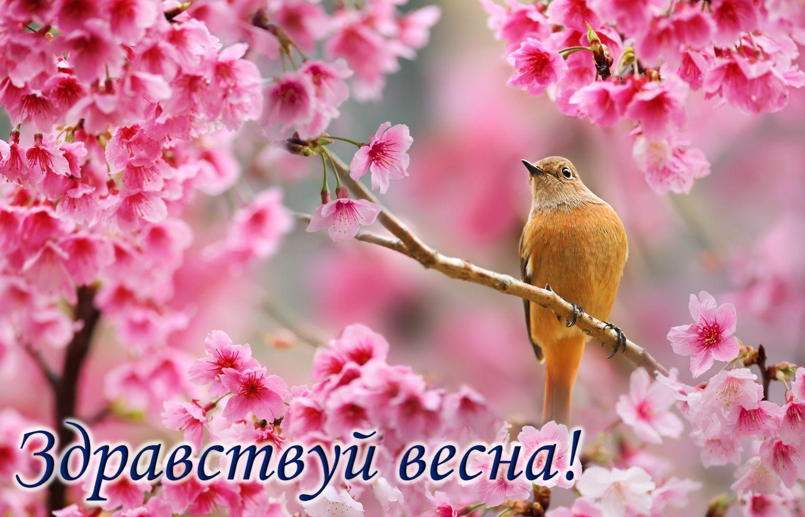 Открытка с первым днем весны - птичка на ветке среди розовых цветов