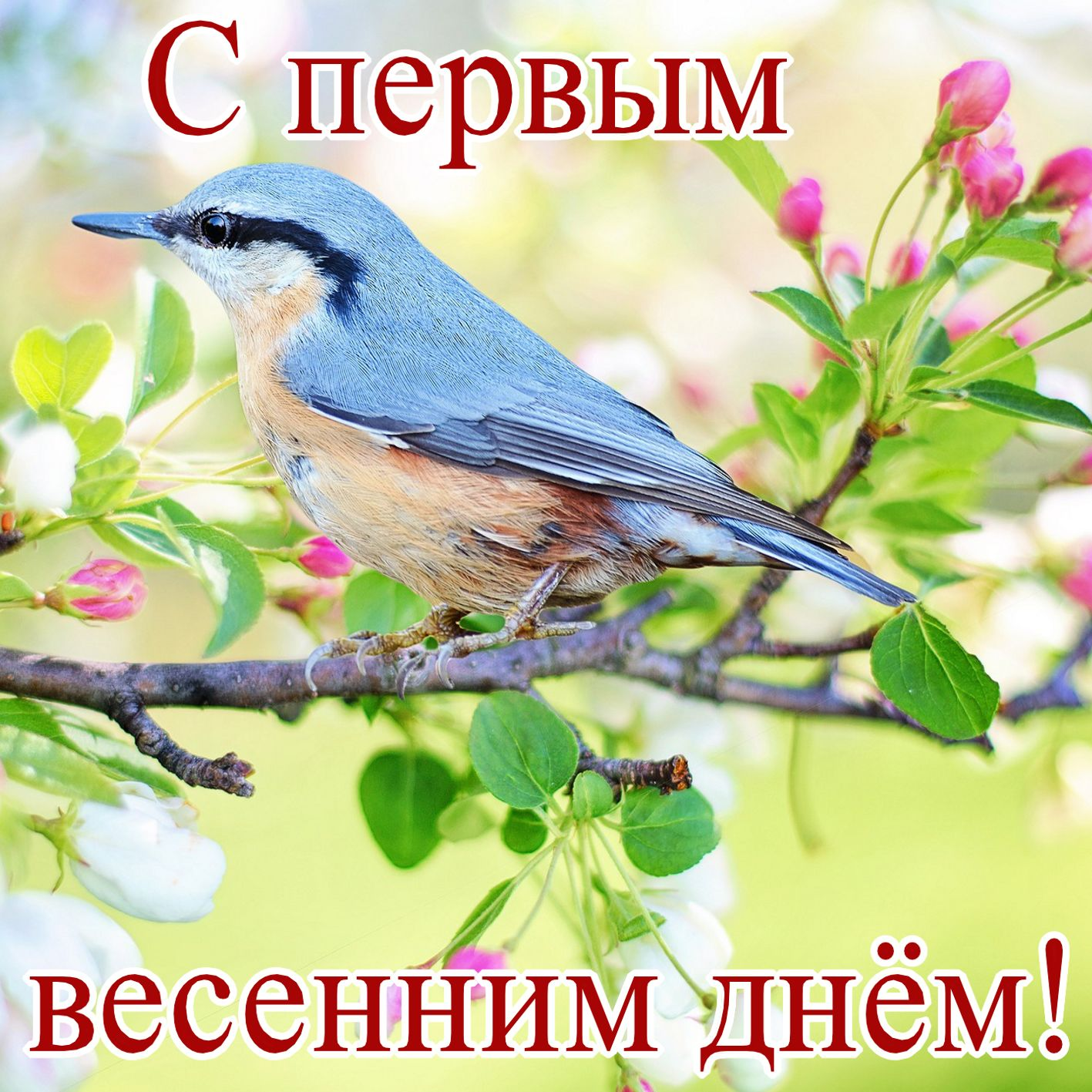 Птичка на распустившейся ветке к первому Дню весны