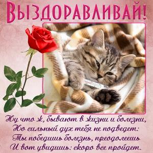 Пожелание выздоравливать и красная роза