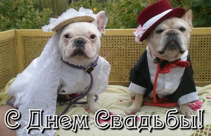На свадьбу, собачки, свадебный наряд