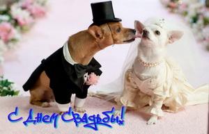 На свадьбу, собачки женятся