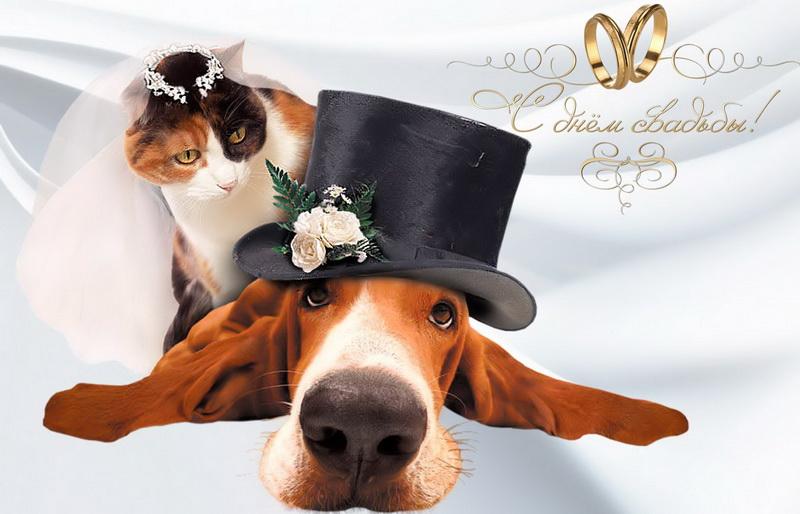 С днем свадьбы, собачка, кошка