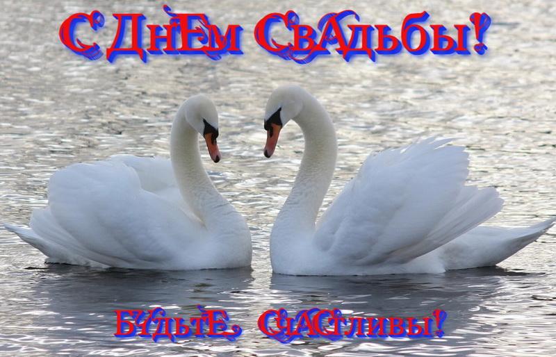 Открытка, будьте счастливы, лебеди
